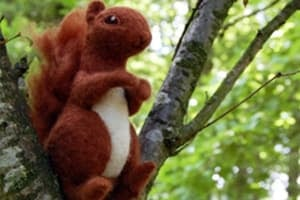 Woollen Woods - Red Squirrel